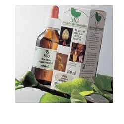 Betula Pubescens 100ml Mg